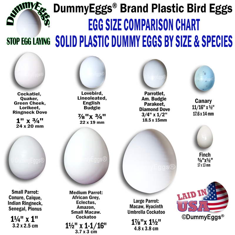 Solid Plastic Dummy Eggs to Stop Laying in Pet Birds. All Sizes Available Shown in Illustration.